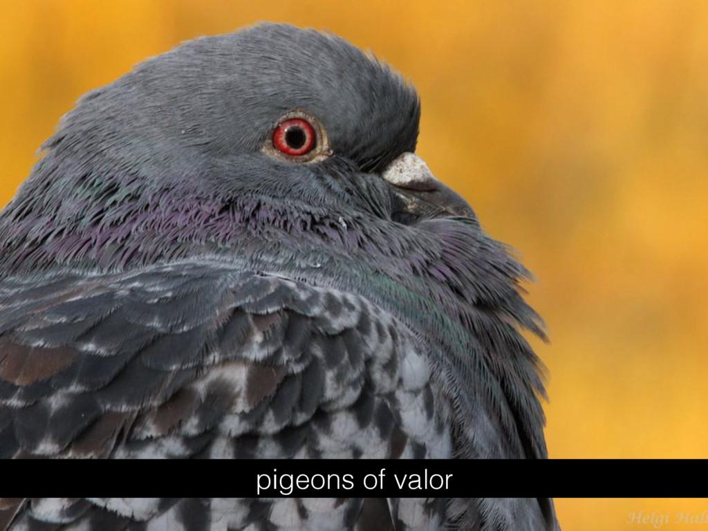 pigeons of valor
