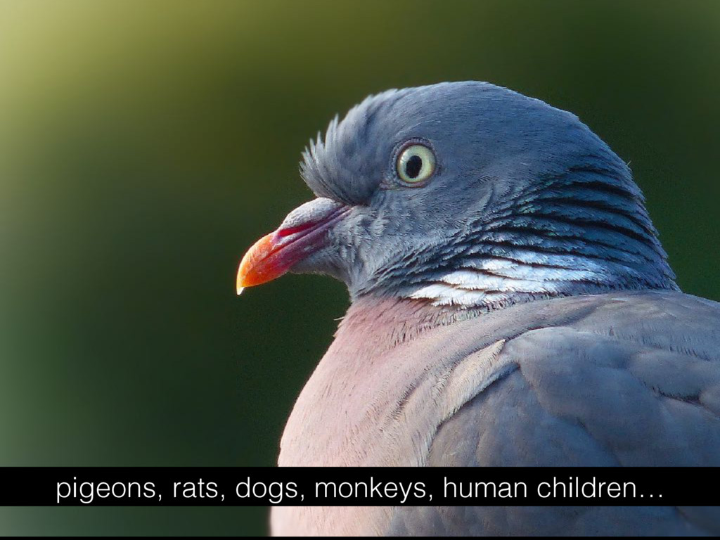 pigeons, rats, dogs, monkeys, human children…