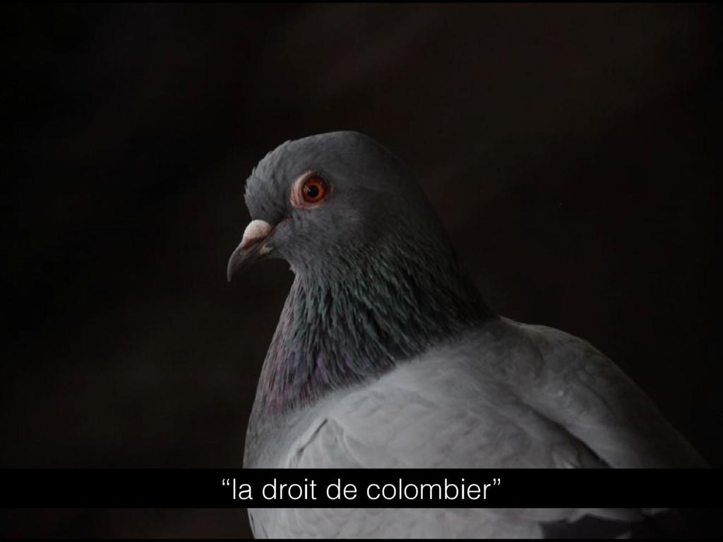 """""""la droit de colombier"""""""