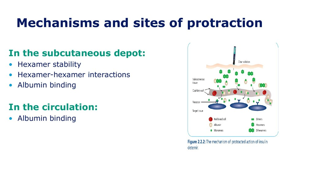 Mechanisms and sites of protraction In the subc...