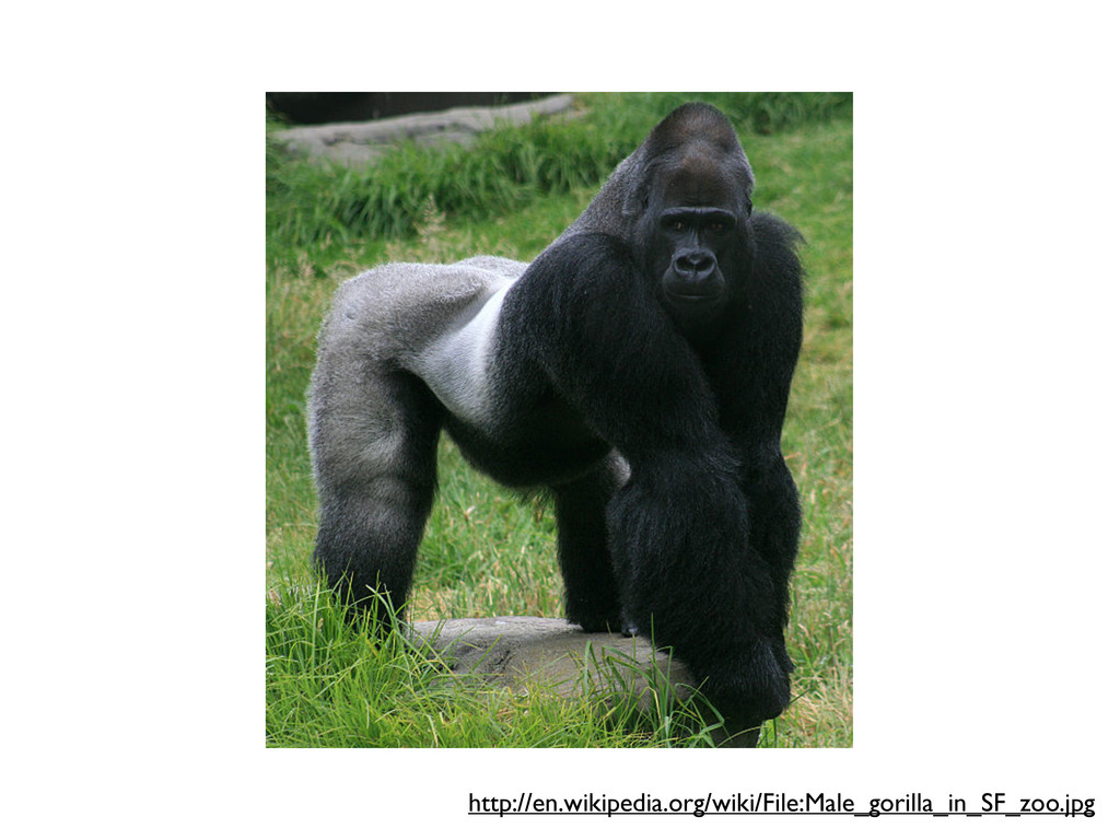 http://en.wikipedia.org/wiki/File:Male_gorilla_...