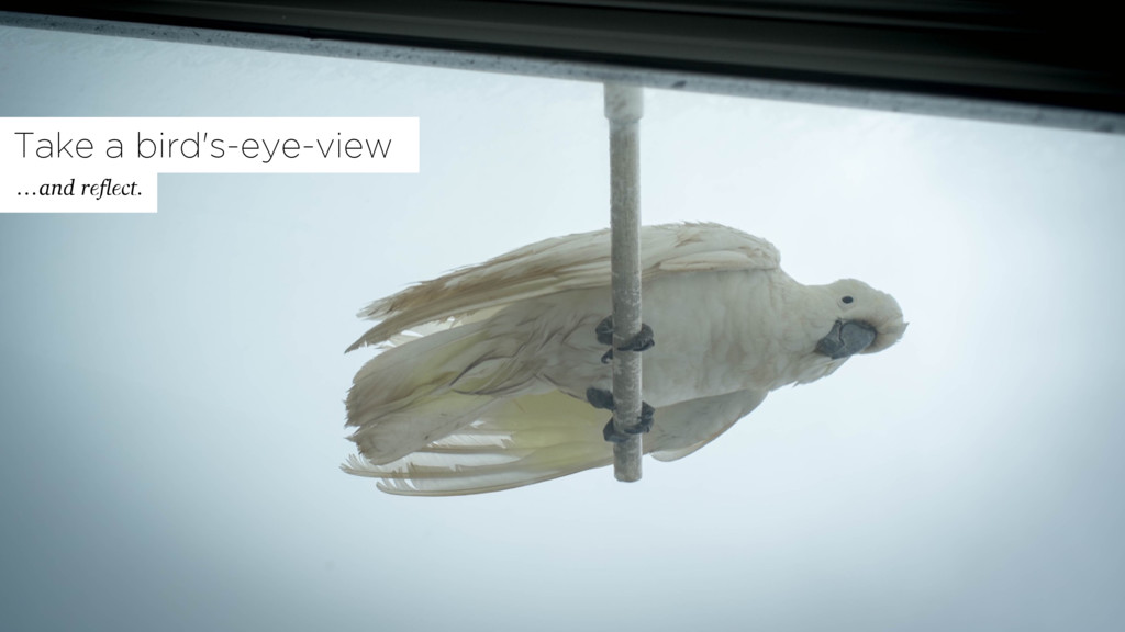 Take a bird's-eye-view …and reflect.