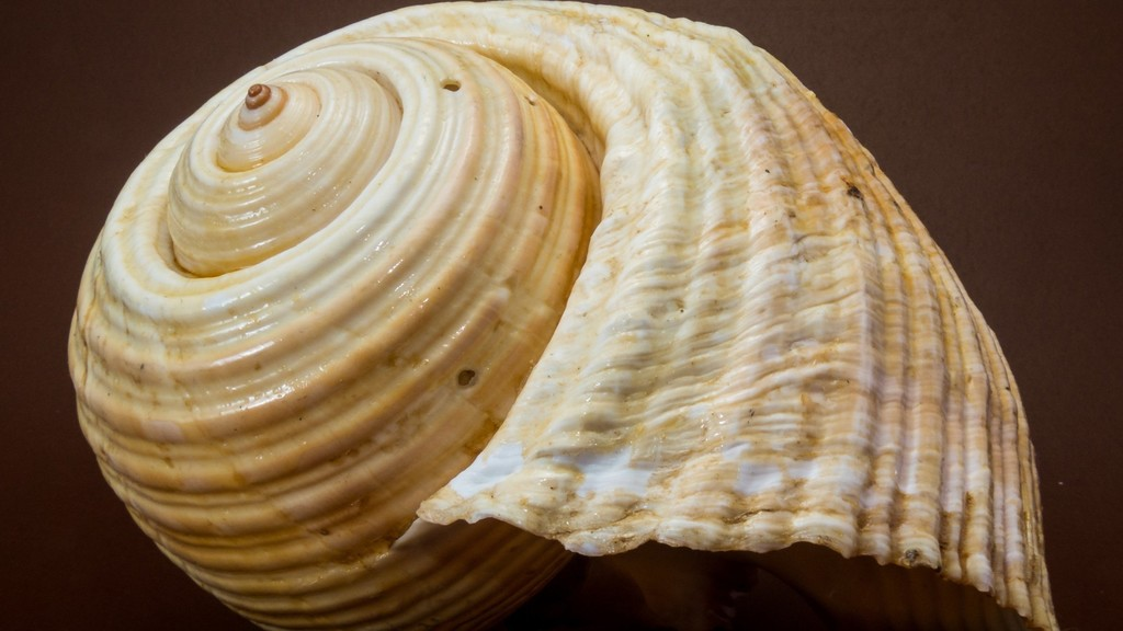 WHAT IS A SHELL?