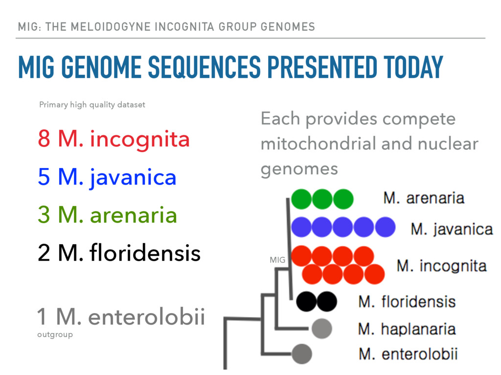 MIG: THE MELOIDOGYNE INCOGNITA GROUP GENOMES MI...