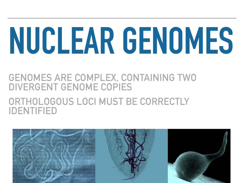 NUCLEAR GENOMES GENOMES ARE COMPLEX, CONTAINING...