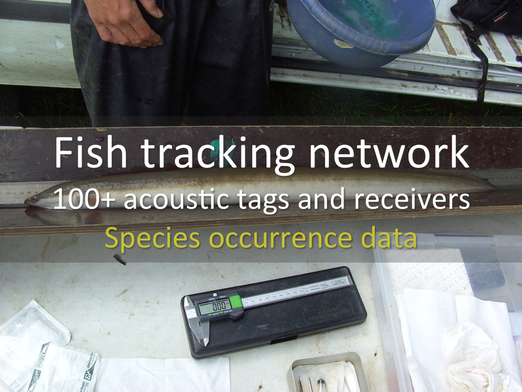 Fish tracking network  100+ acous0c...