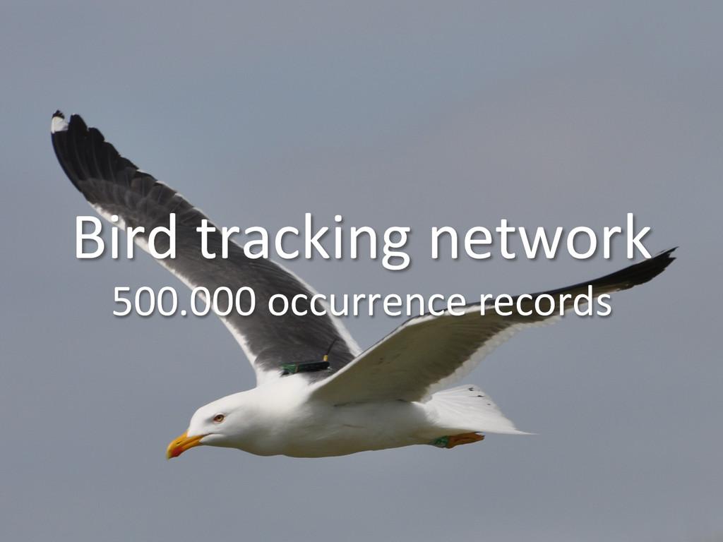 Bird tracking network  500.000 occu...