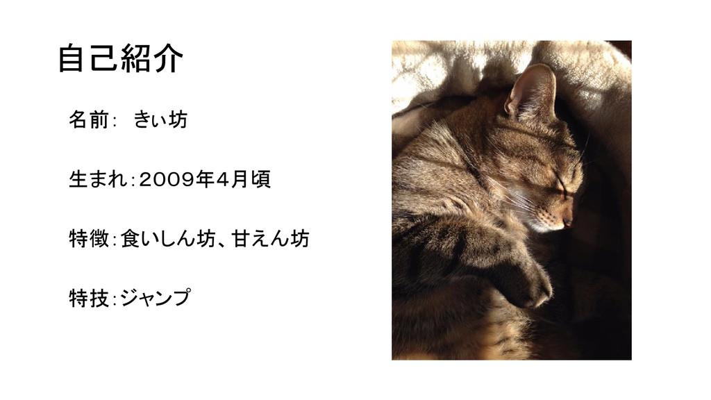 自己紹介 名前: きぃ坊 生まれ:2009年4月頃 特徴:食いしん坊、甘えん坊 特技:ジャンプ