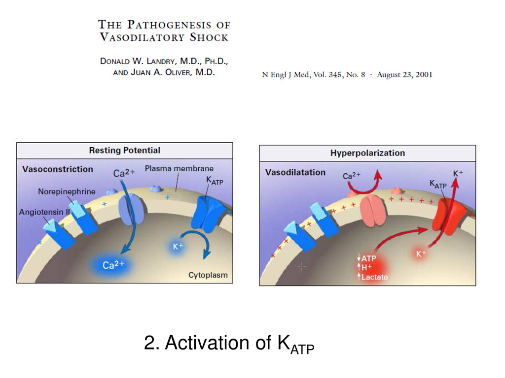 2. Activation of KATP