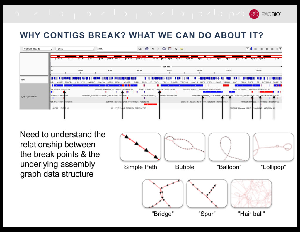 WHY CONTIGS BREAK? WHAT WE CAN DO ABOUT IT? Nee...