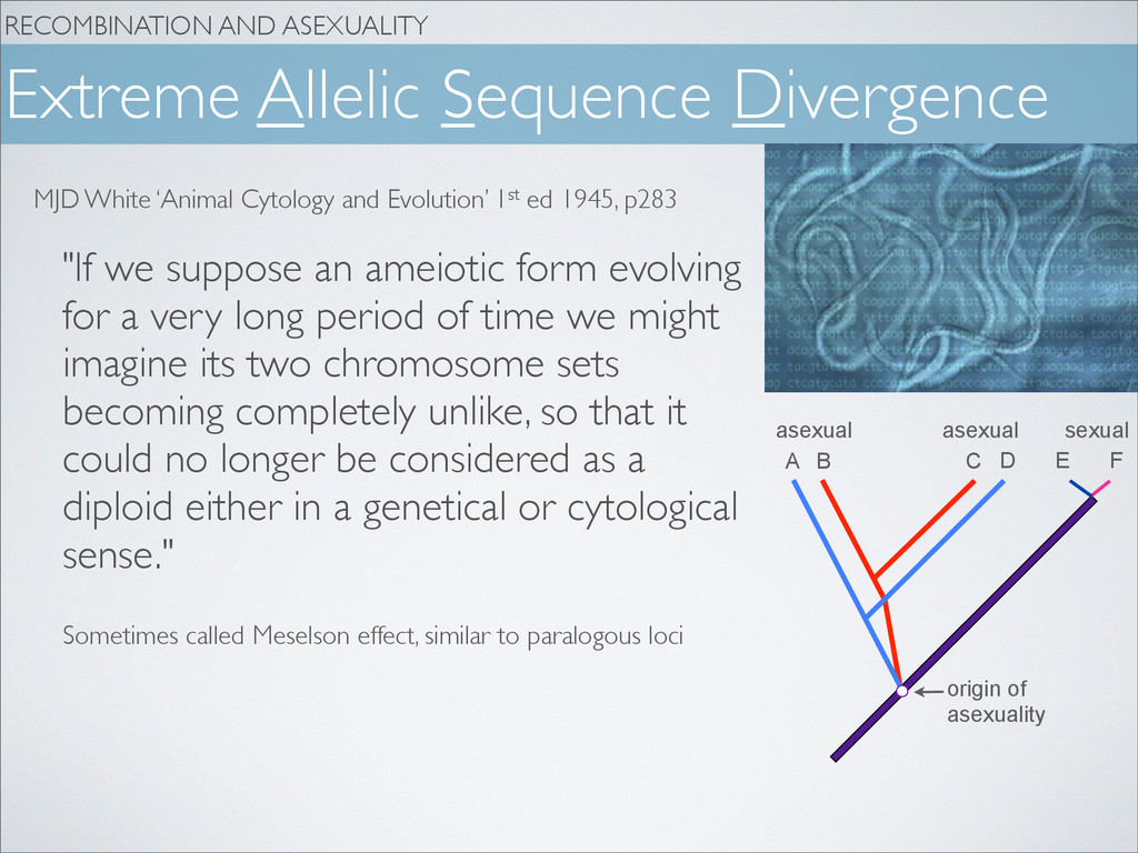 RECOMBINATION AND ASEXUALITY Extreme Allelic Se...