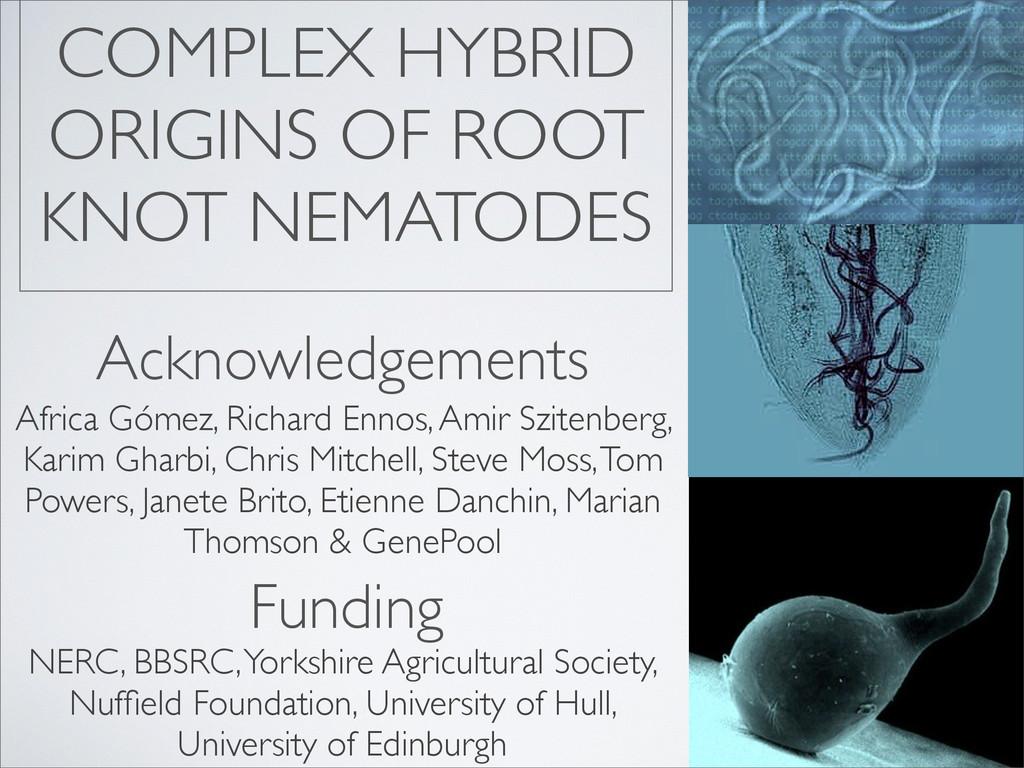 COMPLEX HYBRID ORIGINS OF ROOT KNOT NEMATODES A...