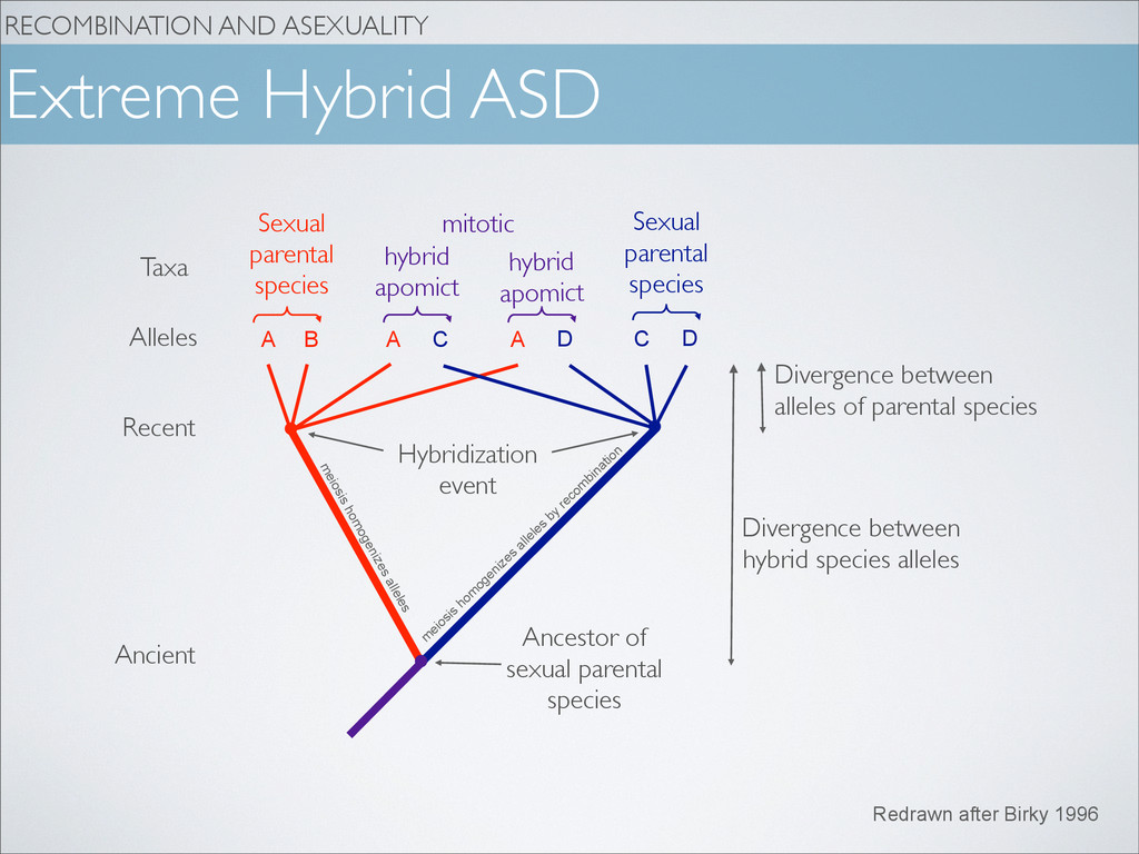 RECOMBINATION AND ASEXUALITY A B A D C Extreme ...
