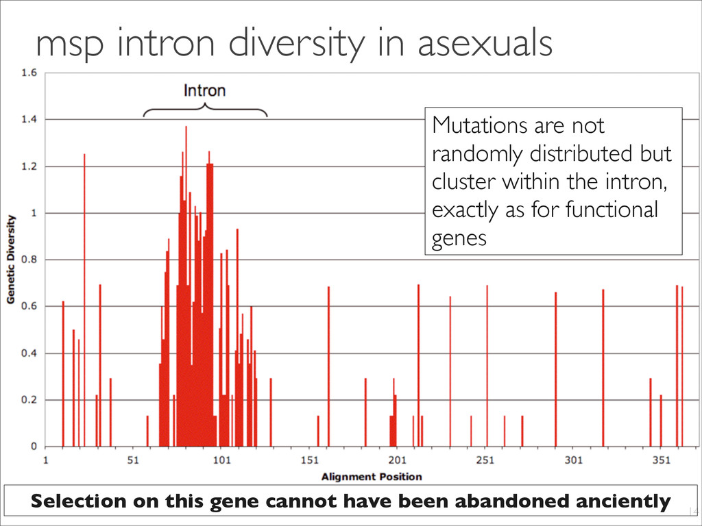 msp intron diversity in asexuals 14 Mutations a...