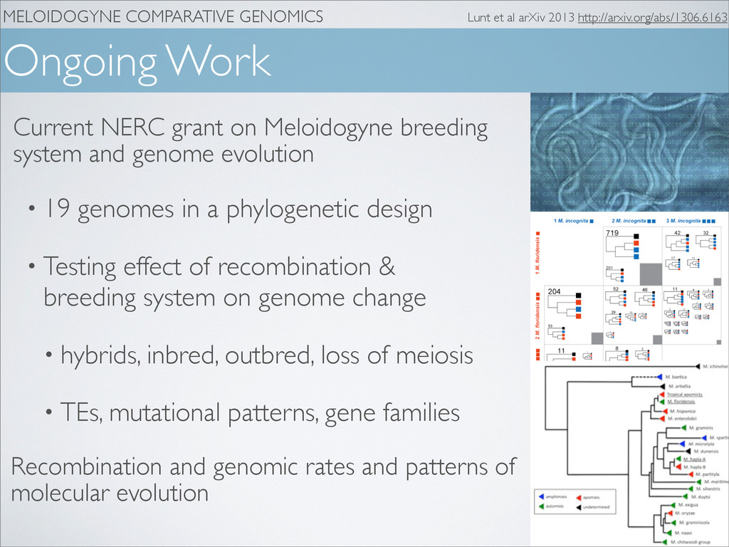 MELOIDOGYNE COMPARATIVE GENOMICS Ongoing Work L...
