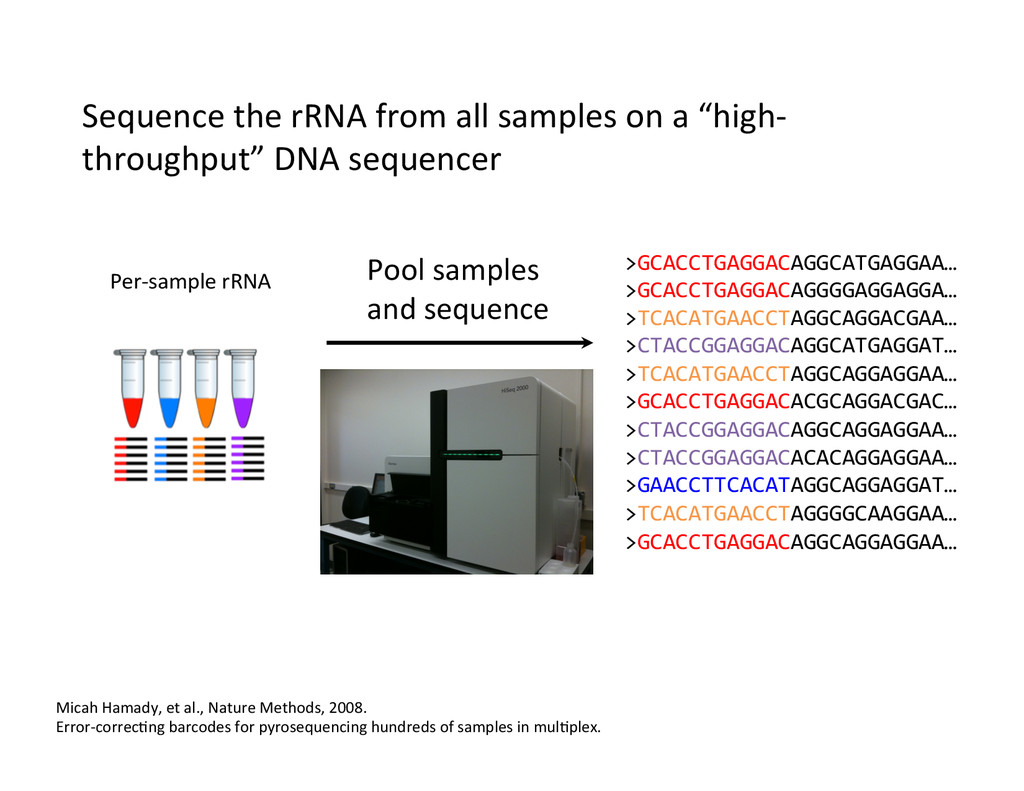 Sequence the rRNA from all sampl...