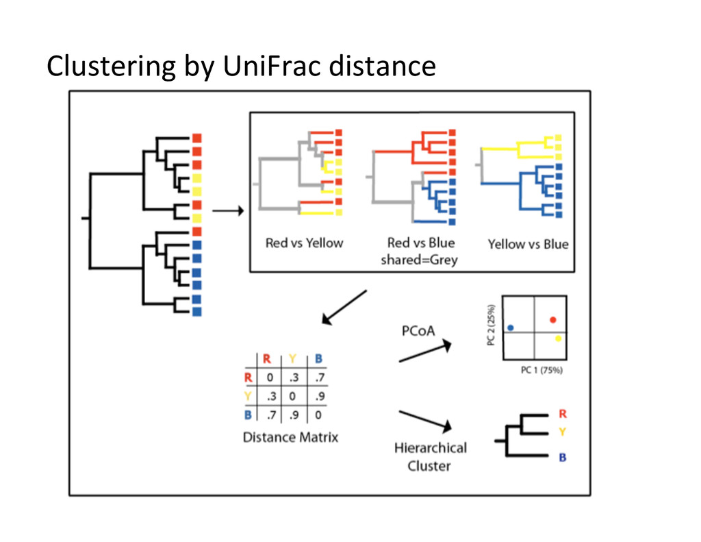 Clustering by UniFrac distance
