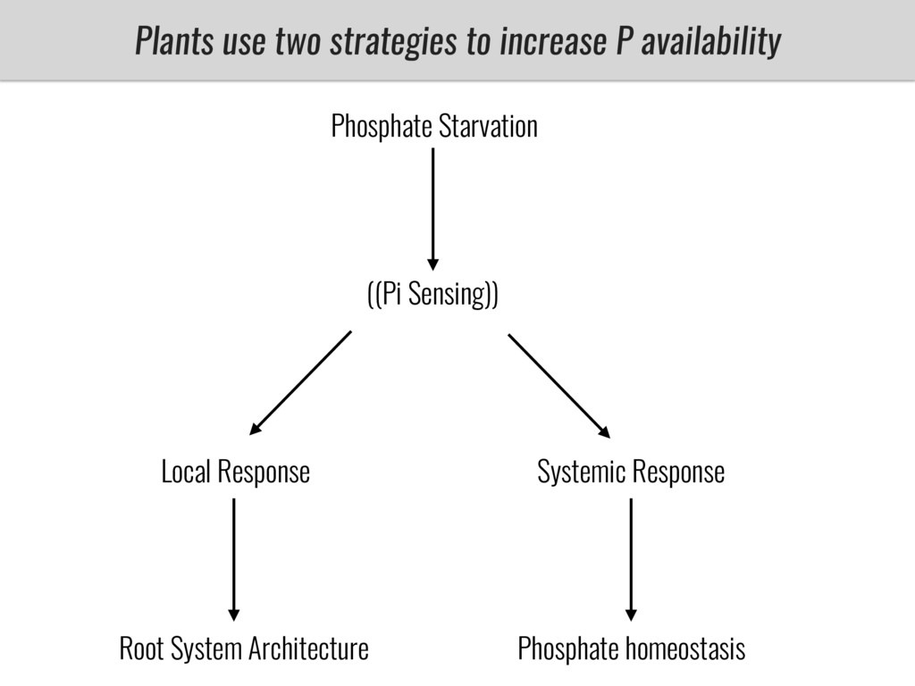 Plants use two strategies to increase P availab...