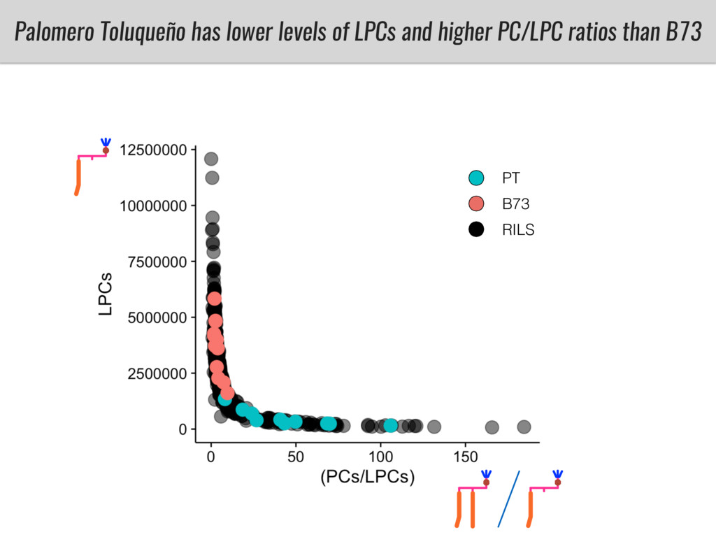 Palomero Toluqueño has lower levels of LPCs and...