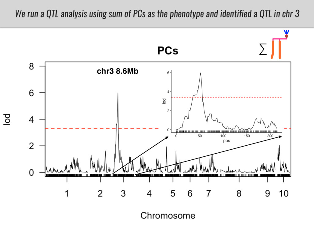 We run a QTL analysis using sum of PCs as the p...