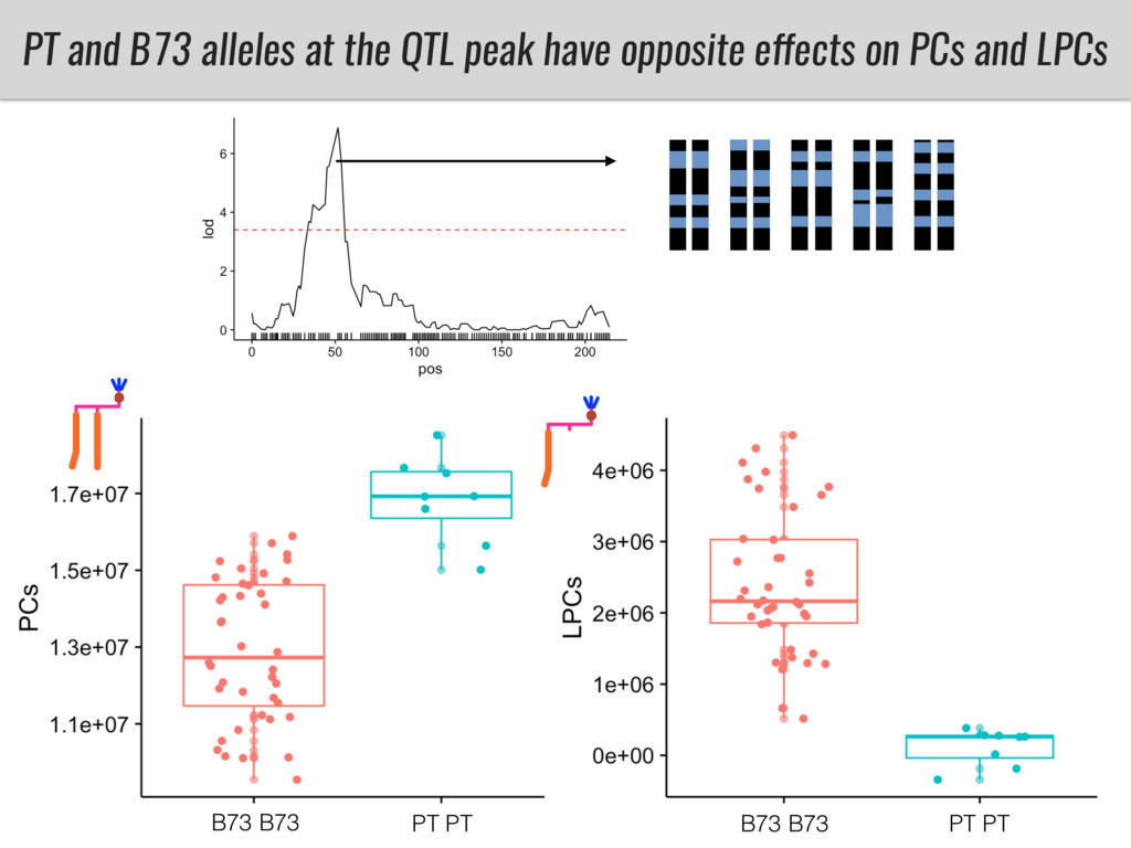PT and B73 alleles at the QTL peak have opposit...