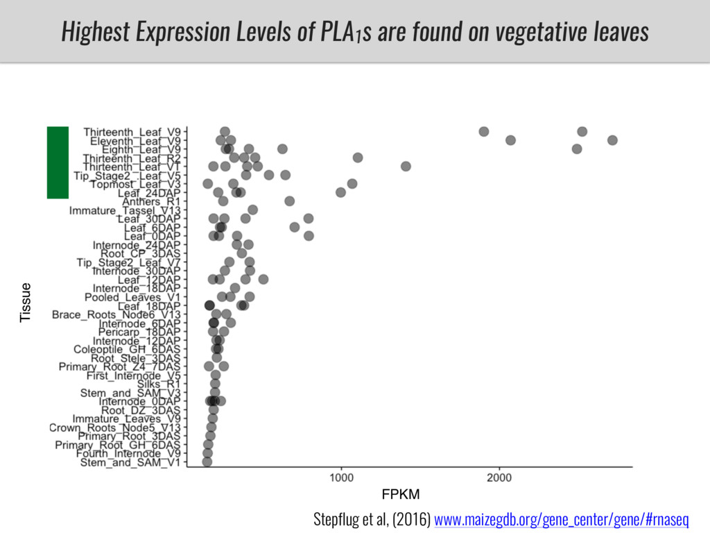 Highest Expression Levels of PLA1 s are found o...