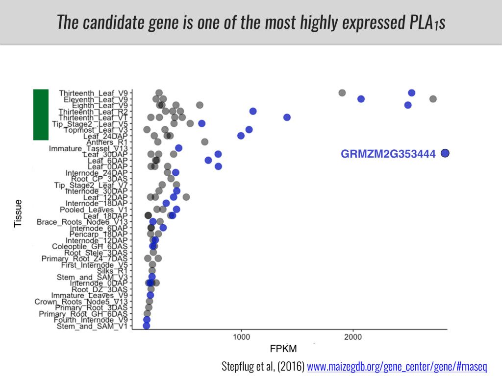 The candidate gene is one of the most highly ex...