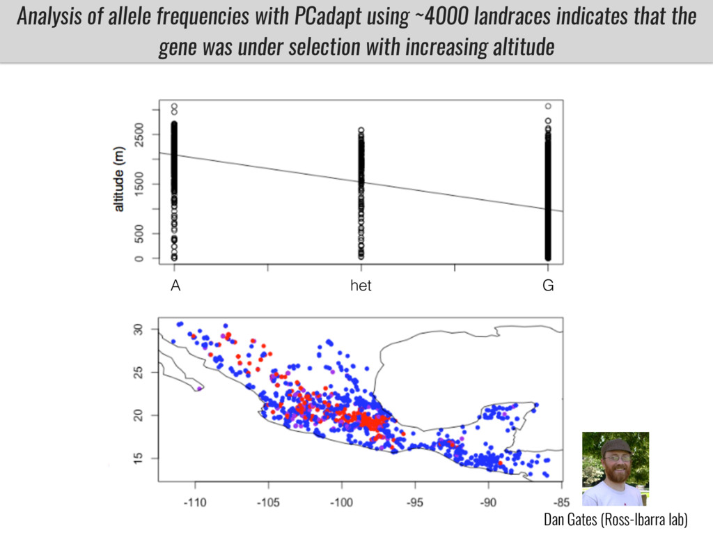 Analysis of allele frequencies with PCadapt usi...