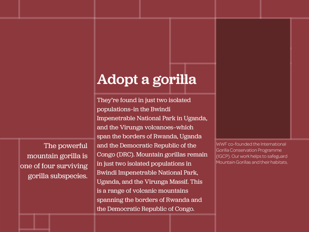 Adopt a gorilla They're found in just two isola...