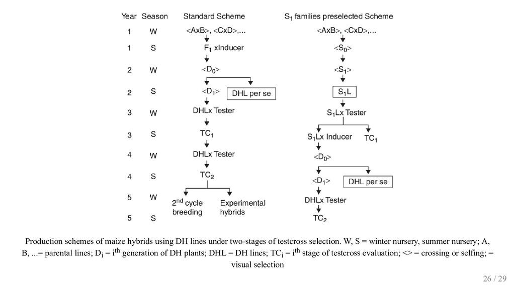 Production schemes of maize hybrids using DH li...