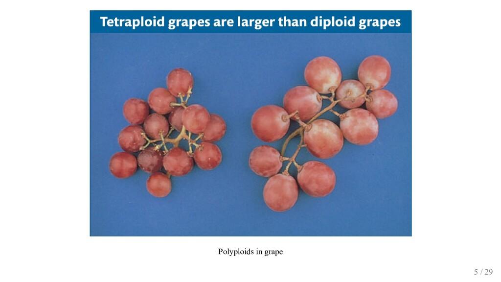 Polyploids in grape 5 / 29