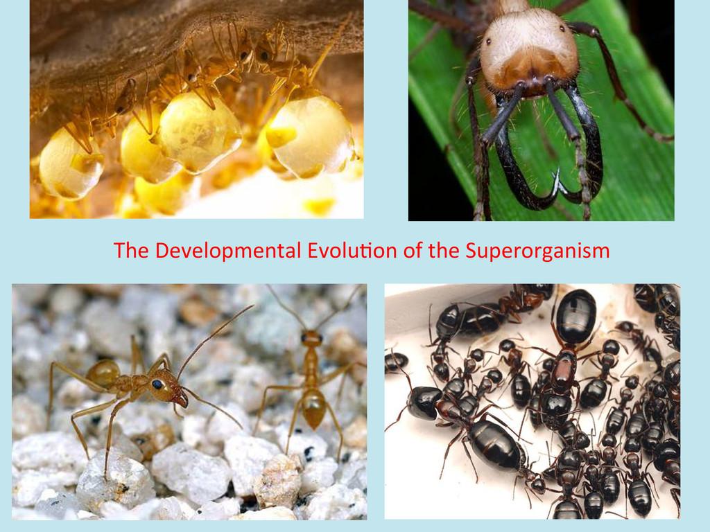 The Developmental Evolu/on of the...