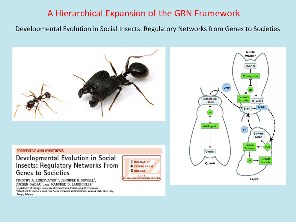 A Hierarchical Expansion of the ...