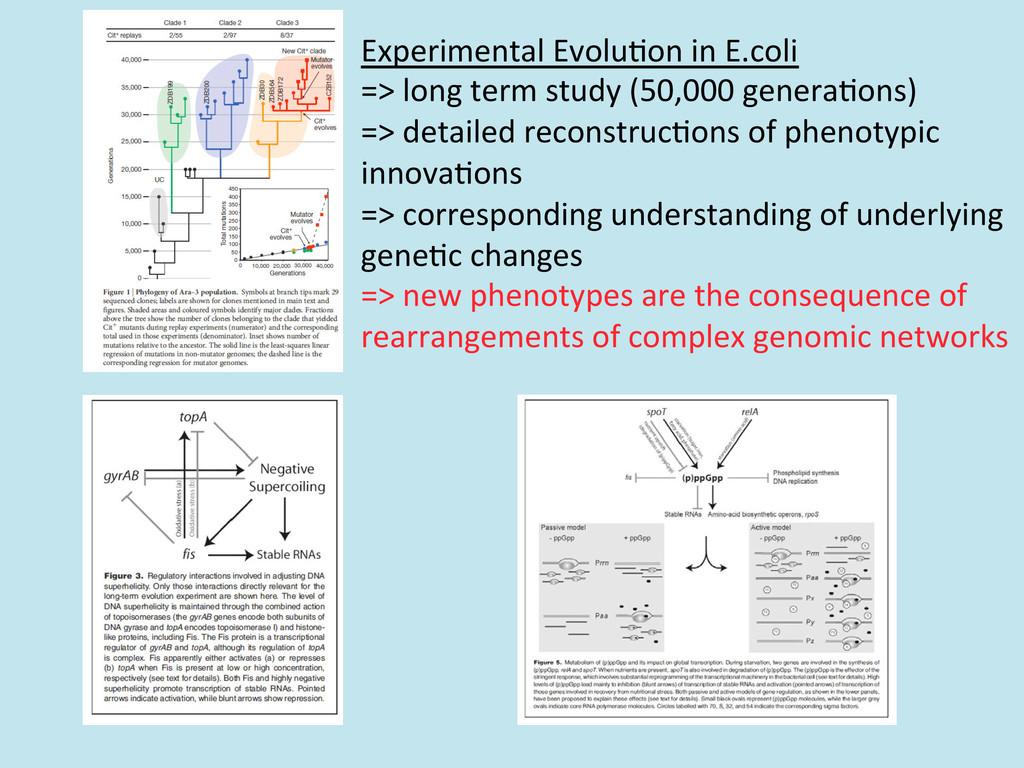 Experimental Evolu/on in E.coli  =>...