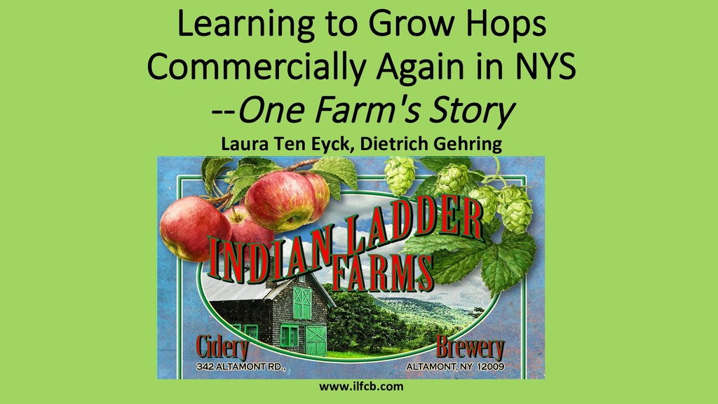 Learning to Grow Hops Commercially Again in NYS...