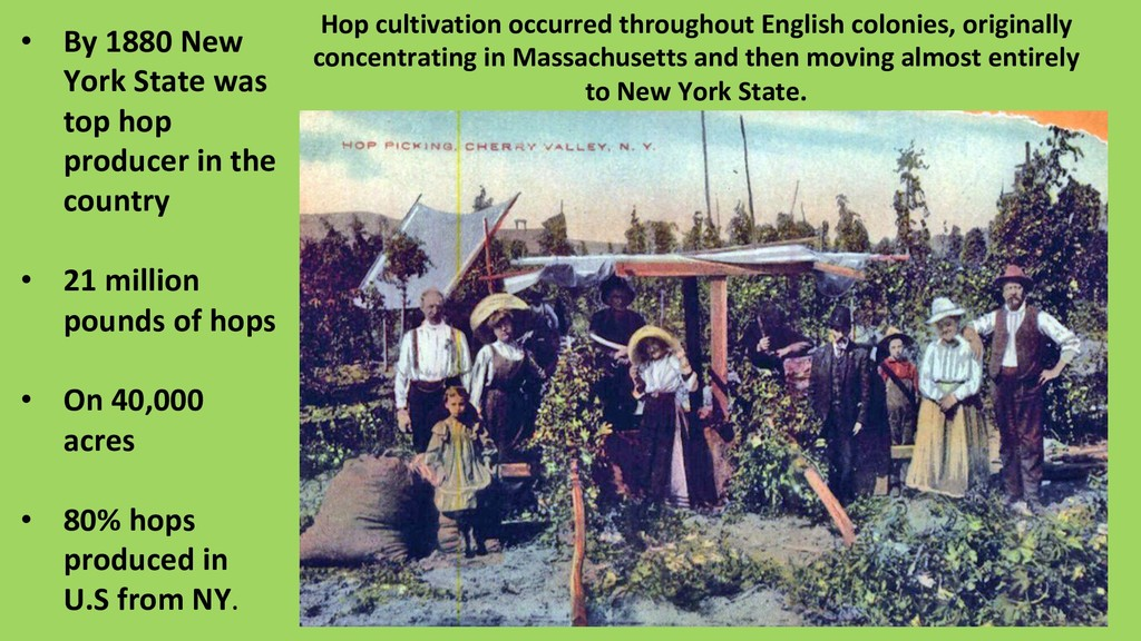 Hop cultivation occurred throughout English col...