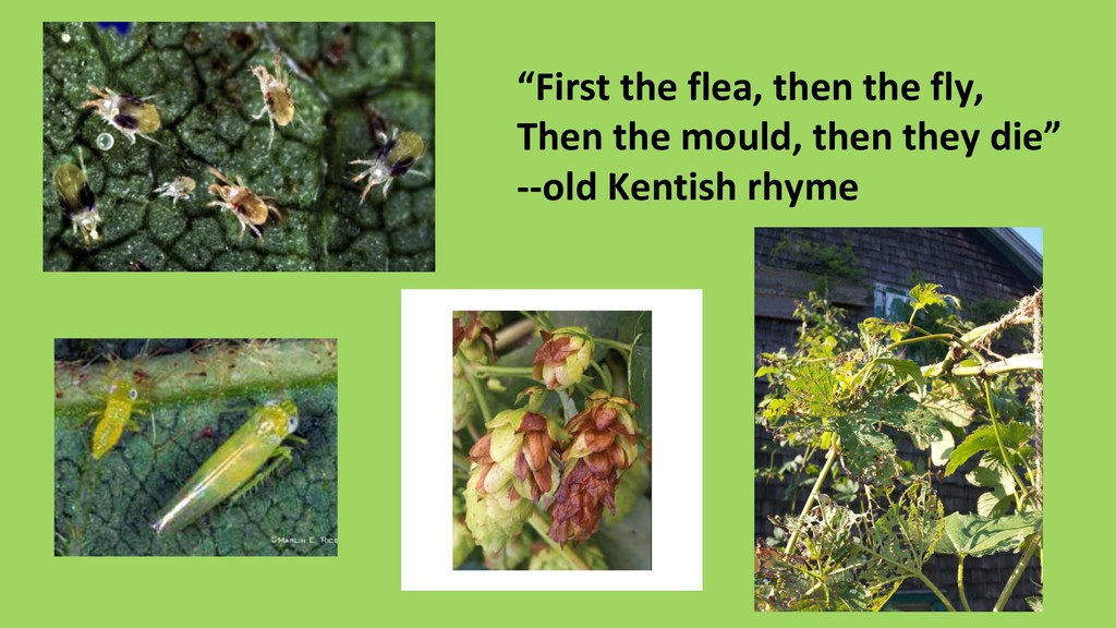 """""""First the flea, then the fly, Then the mould, ..."""
