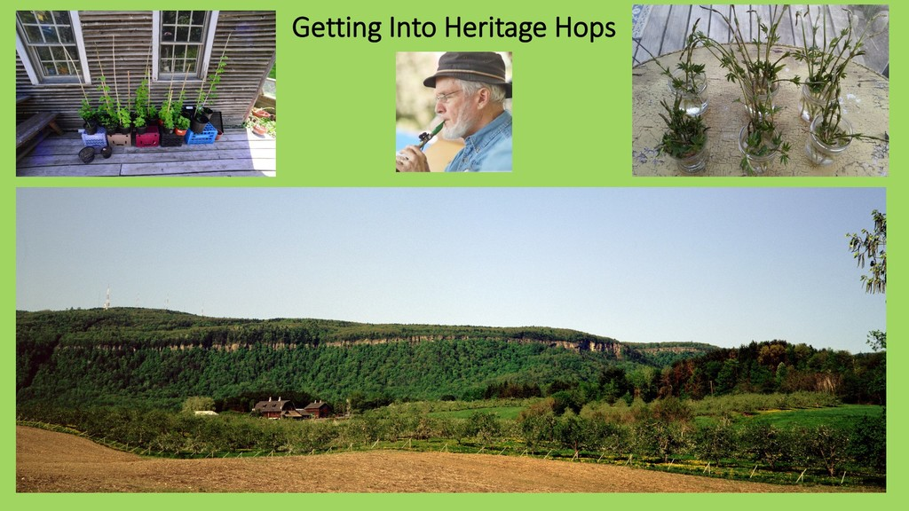 Getting Into Heritage Hops