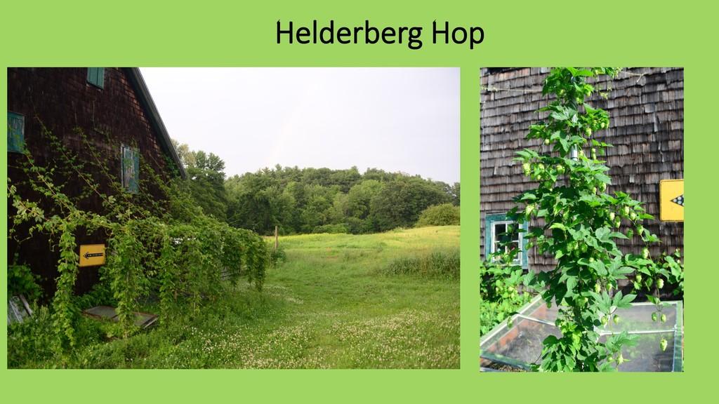 Helderberg Hop