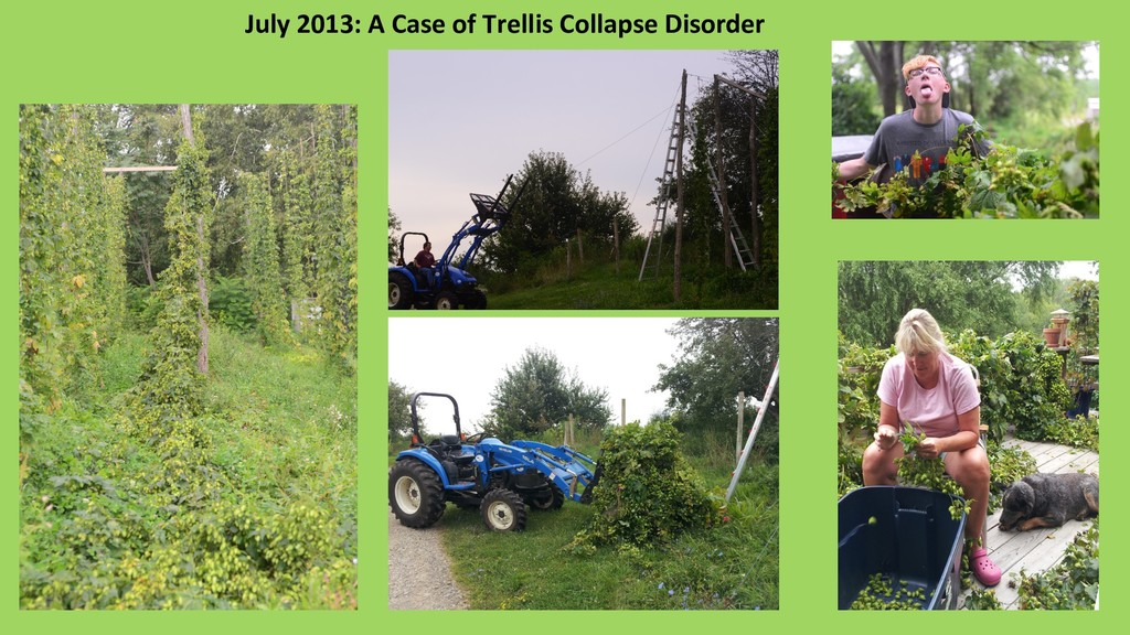 July 2013: A Case of Trellis Collapse Disorder