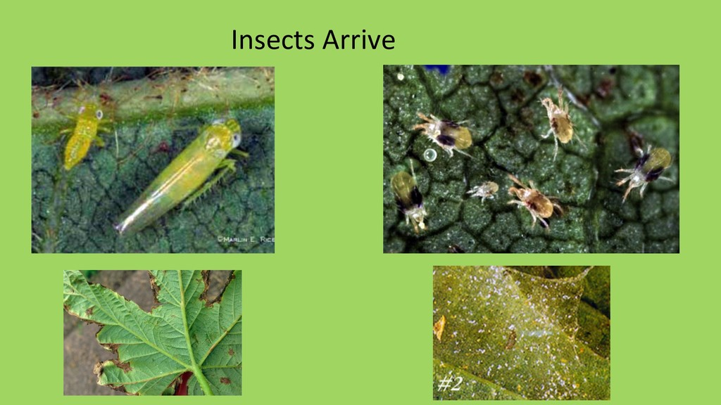 Insects Arrive