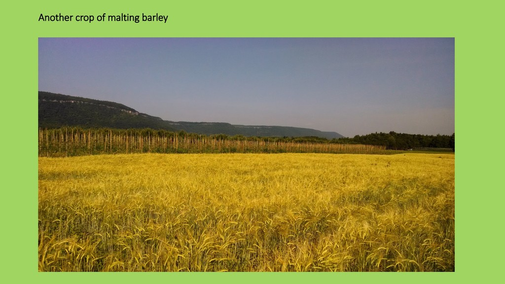 Another crop of malting barley