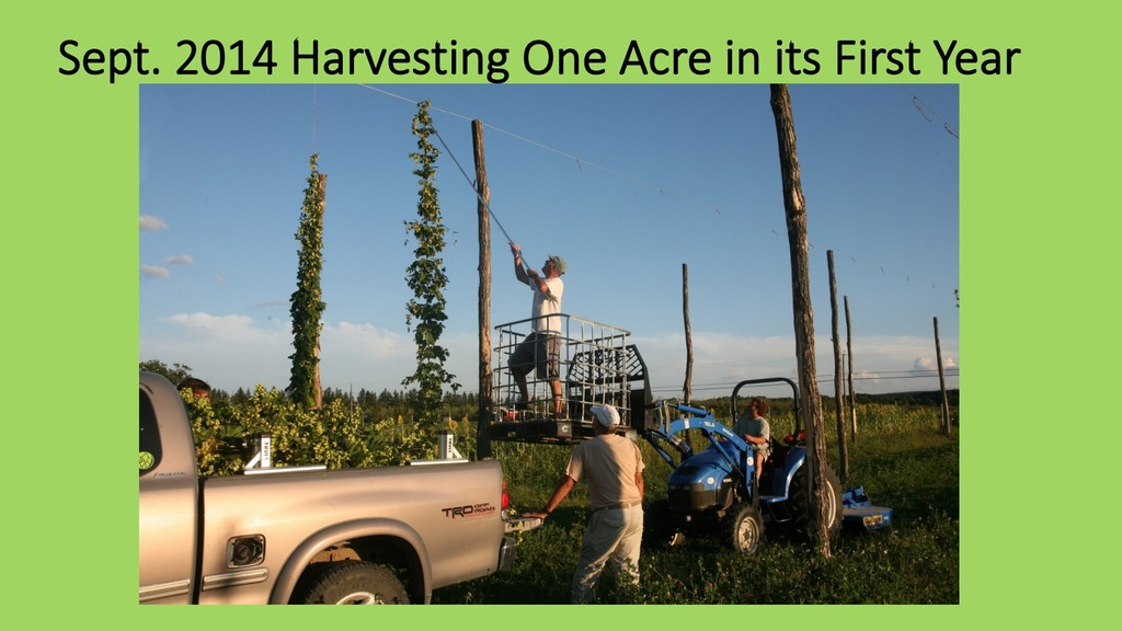 Sept. 2014 Harvesting One Acre in its First Year