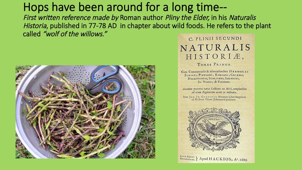 Hops have been around for a long time-- First w...