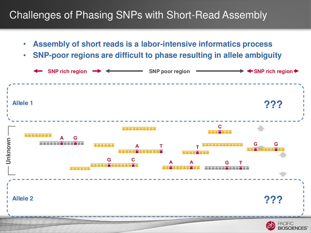 Challenges of Phasing SNPs with Short-Read Asse...
