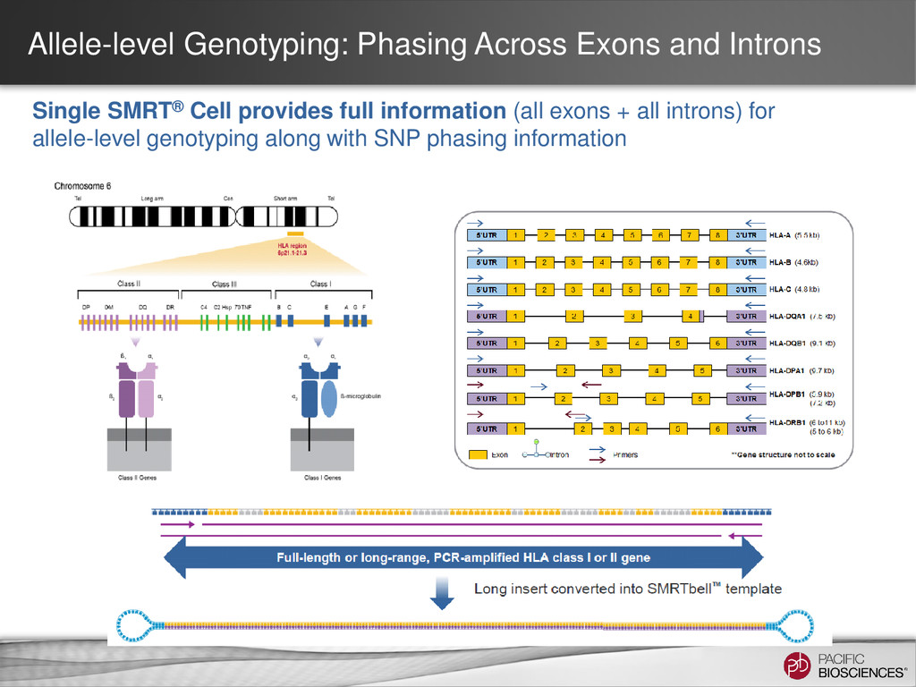 Allele-level Genotyping: Phasing Across Exons a...