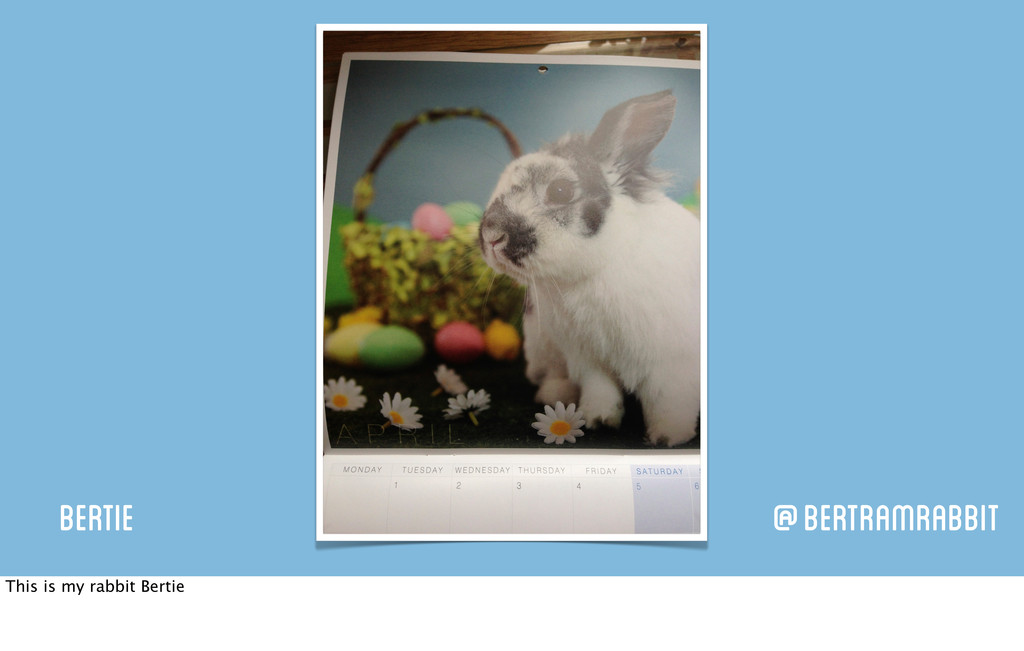 Bertie @BertramRabbit This is my rabbit Bertie