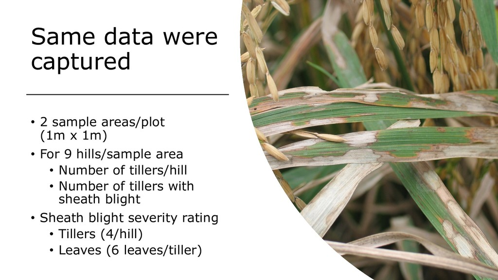 Same data were captured • 2 sample areas/plot (...