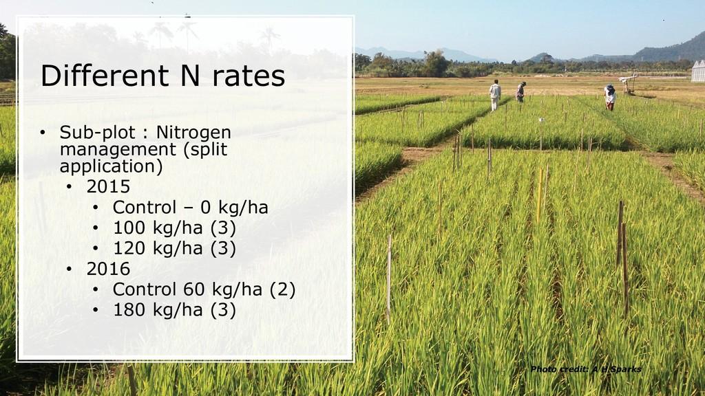 Different N rates • Sub-plot : Nitrogen managem...