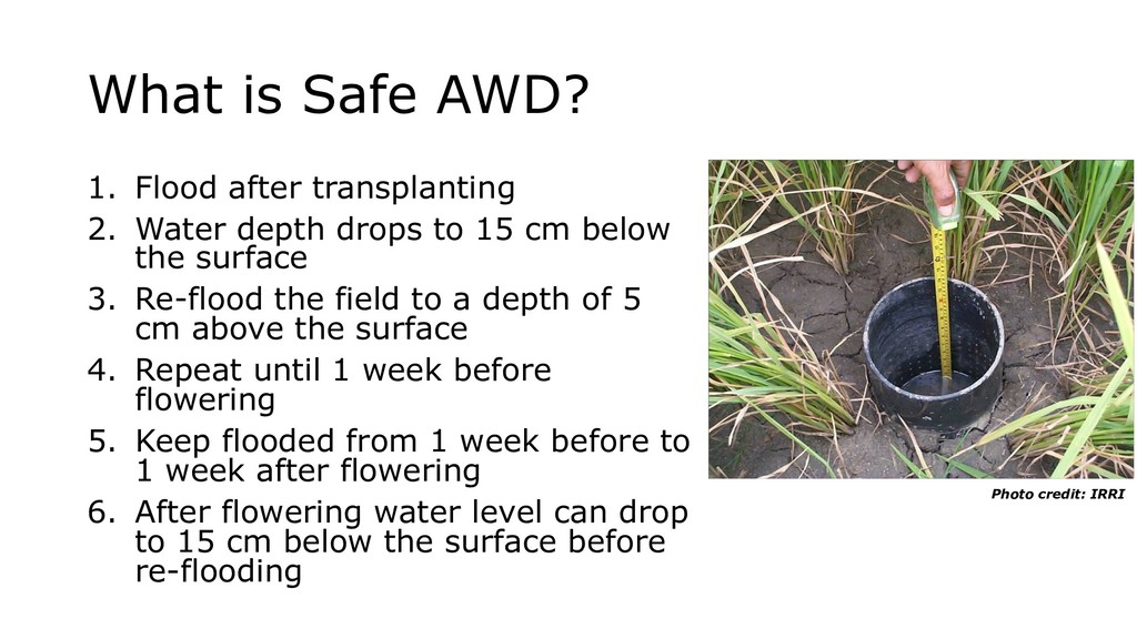 What is Safe AWD? 1. Flood after transplanting ...